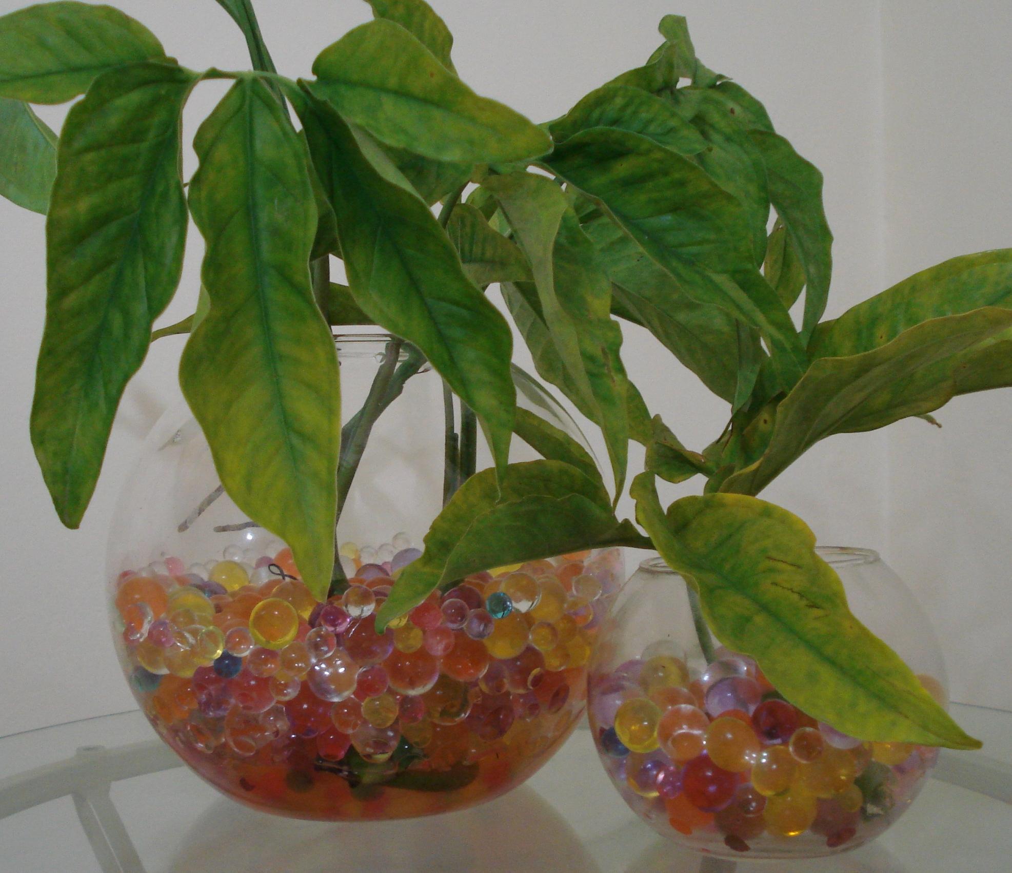 #304414 Dica para colorir a casa: as bolinhas de gel Tendências 2013 1973x1701 px plantas para banheiro feng shui
